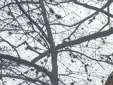 Treehouse (Fear)/Gallery