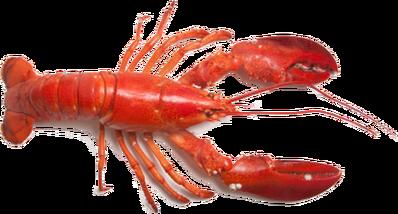 Lobster PNG14262