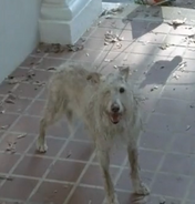 Walking dead 1 eyed dog