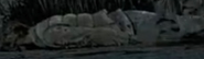 TUB armando dead body