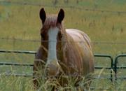 Wd-siggardhorse