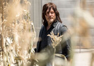 The-walkingd-dead-season-9-daryl-reedus-935