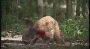 TGC ProtoceratopsWouned