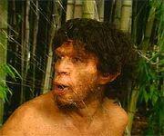 Homo ergaster erectus img5