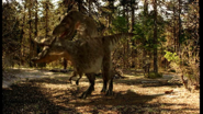 Mating Tyrannosaurus