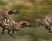 Evi hyaenodon large