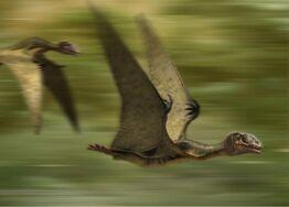 WWD Anurognathus