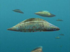 WWM1x1 Haikouichthys