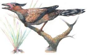 Sinornis new