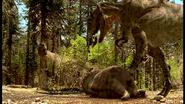 Tyrannosaurus eating