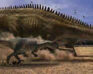 Big Al chasse Diplodocus