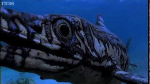 Ophtalmosaurus Birth