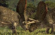 Torosaurus Fight