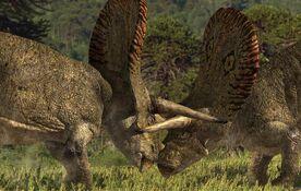Torosaurus Fight
