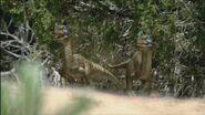1280px-BA OrnitholestesPair