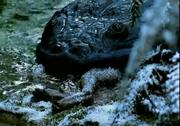 Koolosuchus