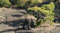640px-Macrogryphosaurus.png