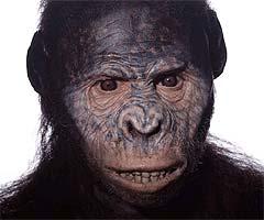 Australopithecus afarensis img1