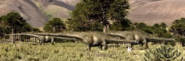 Three Members Diplodocus Walking With Dinosaurs