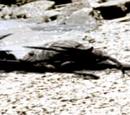 Megalograptus