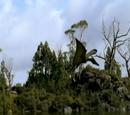 Unidentified Pterosaur (WWD)