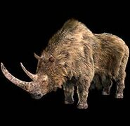 Woolly rhino 1