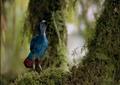 Cretaceous bird.png