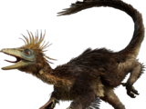 Troodonts