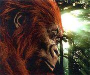 Gigantopithecus blacki img1
