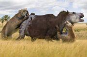 Smilodon attack