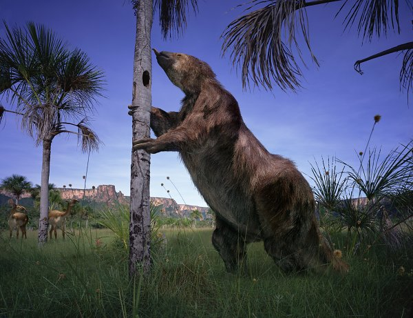 Image result for images of megatherium