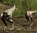 Tyrannosaurus Chicks/Galley