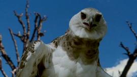 Eagle looks at screen