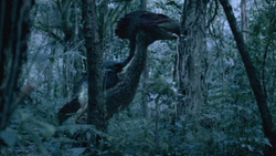 Gastornis walks through woods