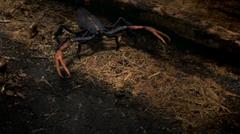 Scorpion under log PP05