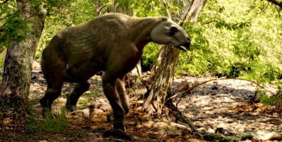 File:Chalicothere emerges from forest WWB.png