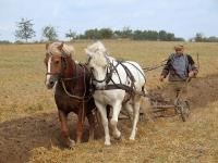 HorseAndPlough