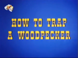How to Trap a Woodpecker