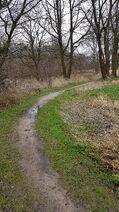 Pad langs weilanden Saasveld