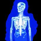 File:ReinforcedSkeleton.png