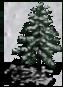 Tree5.v2-Winter