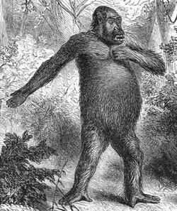 Hanno the Navigator's Gorillai Skin
