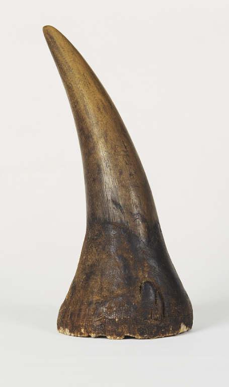 Albrecht D 252 Rer S Rhinoceros Horn Warehouse 13 Artifact