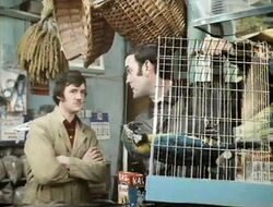 Monty python dead parrot