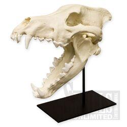 Joseph Vacher's Dog Skull