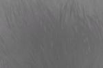 Bombardero blanco kavat