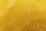 Carga amarilla