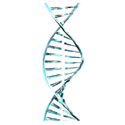 Генетический Код Каватов вики