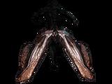 Odonata/Equip