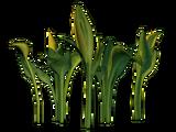 Słoneczny Jadeitowy Liść